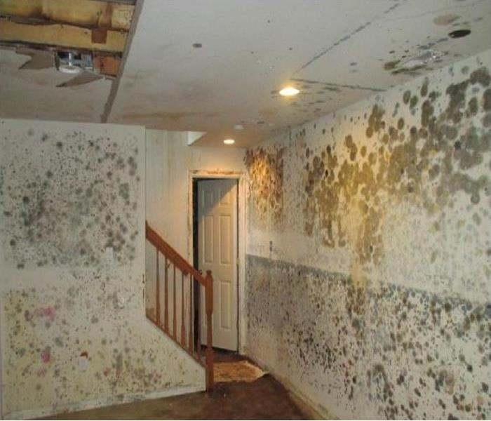 Mold Remediation Aurora Residents:  Follow These Mold Safety Tips If You Suspect Mold