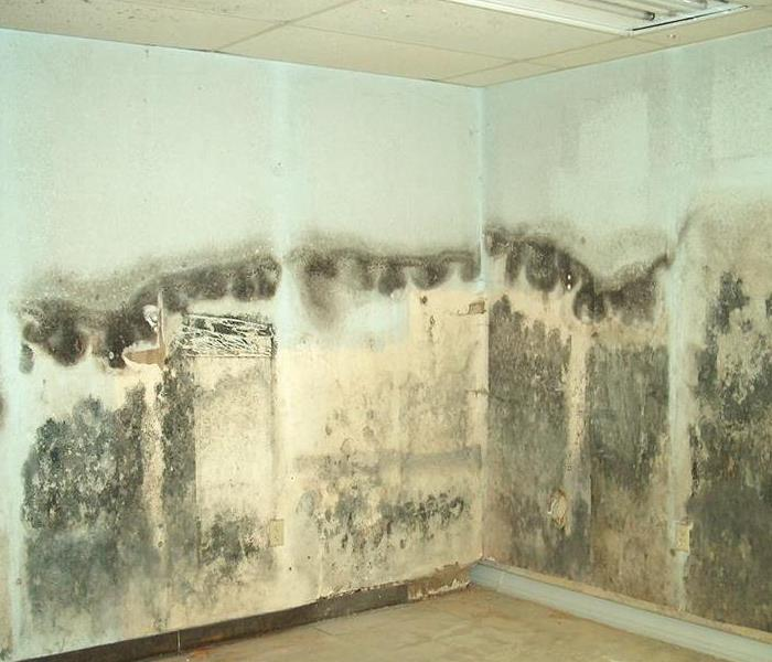 Mold Remediation When Mold Growth is Prevalent in Your Home